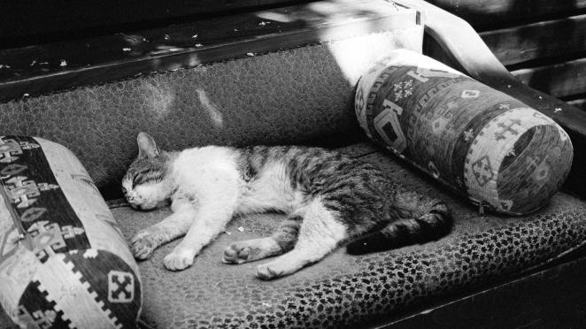 Kot odpoczywający w kawiarni Olympus OMD E-M1, obiektyw 12-40 f 2.8